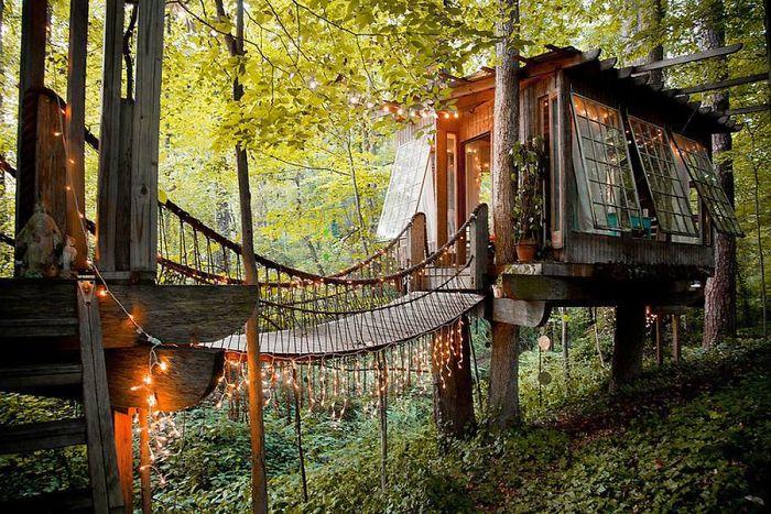 casa bonita na árvore