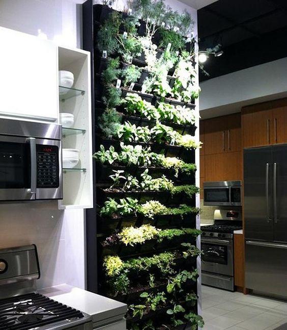 Horta na cozinha